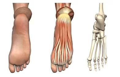 cum functioneaza piciorul