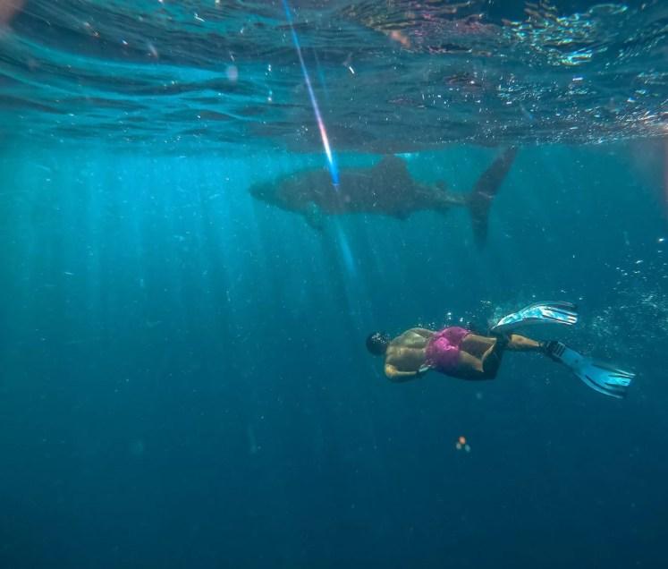 rechin balena langa insula mafiei zanzibar