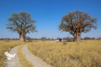 137, Day 242, Baine's Baobab, Nxai Pan, Botswana