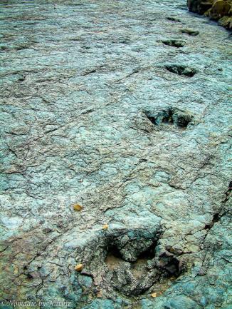 The Dinosaur Tracks in the Village of Niñu Mayu