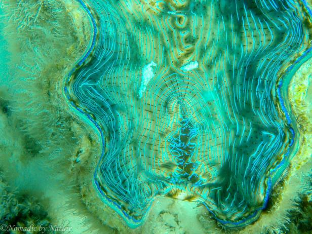 Giant Clam, Aitutaki, Cook Islands