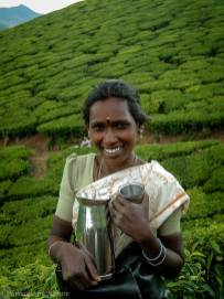 The Black Tea Fields of Munnar, India