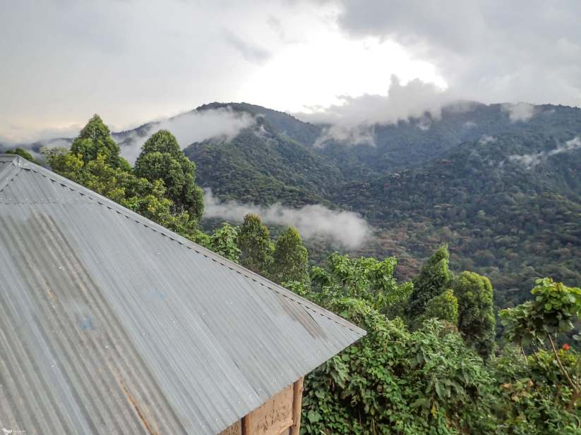 23 Days 43-44 Bwindi Backpackers Lodge, Bwindi Impenetrable National Park, Uganda