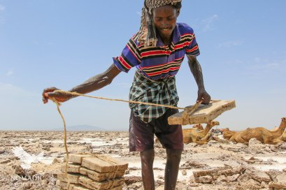 Preparing Salt for Loading on the Camels, Danakil Depression, Ethiopia