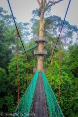 Sky Walkway, Danum Valley