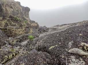 Black Lichen Being Covered by White Snow, Weismann's Peak