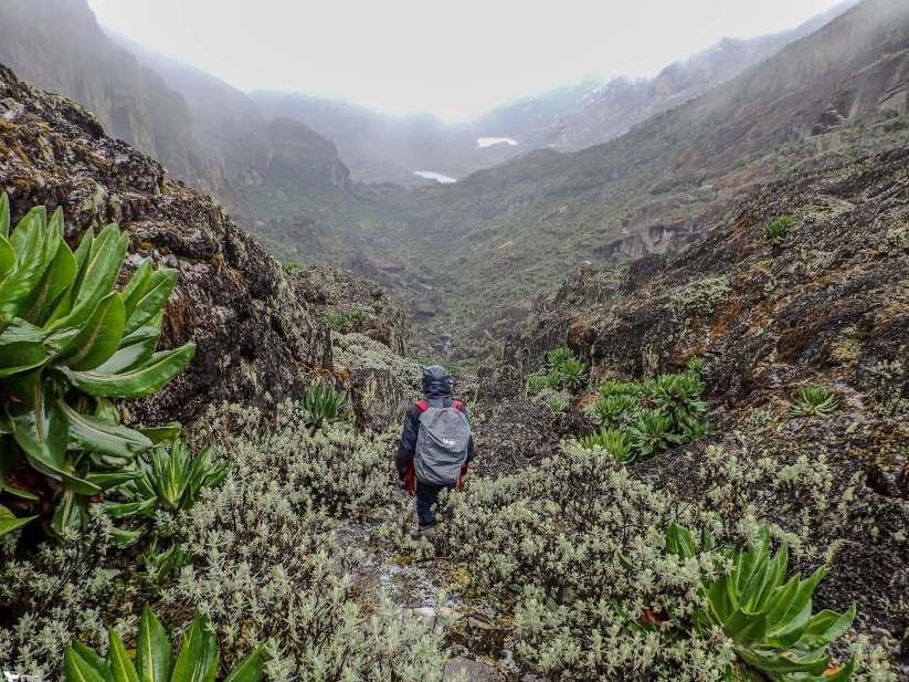 Descending from Weismann's Peak, Rwenzori Mountains National Park