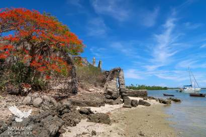 Flame Tree, Ibo Island, Quirimbas National Park, Mozambique