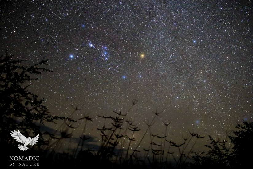 Orion Over Crowfoot Grass, Stargazing on the Kalahari Plains, Botswana