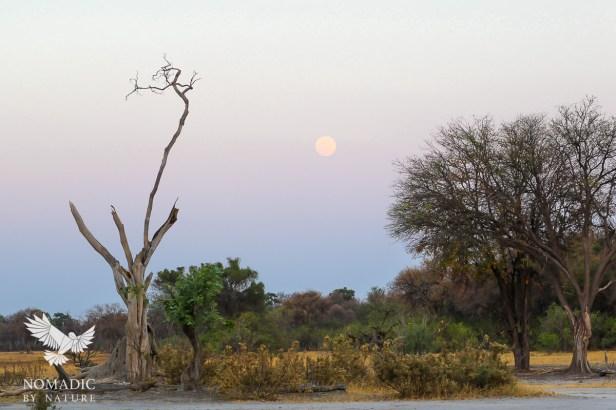 The Rising Supermoon in Khwai, Moremi Game Reserve, Botswana