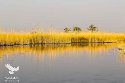 The Reflections of Reeds, Okavango Delta, Botswana