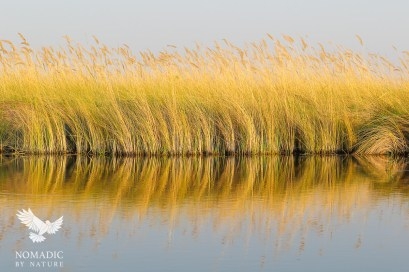 The Golden Reeds of the Okavango Delta, Botswana