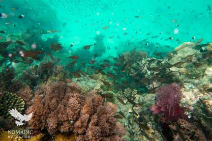 Assortments of Tropical Fish, Snorkeling Rolas Island, Quirimbas National Park, Mozambique