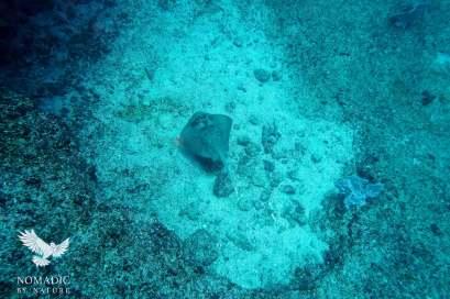 Stingray, Scuba Diving, Tofo Beach, Mozambique