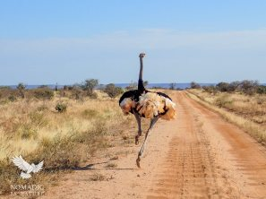Kenya Road Trip Tips, Tsavo East National Park, Kenya