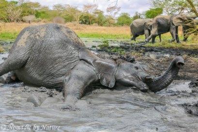 A Proper Elephant Mud Bath, Umani Springs