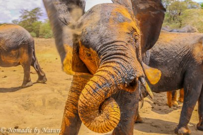 Baby Elephant in Warrior Mode, Umani Springs