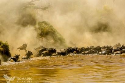 Wildebeest Fall Like Raindrops into the Mara River