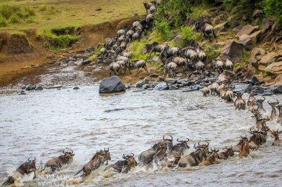 A Single Filed Sprint Across the Mara River