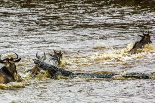 A Brutal Monster Crocodile Attack