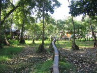 A path through the trees in Rio Dulce.