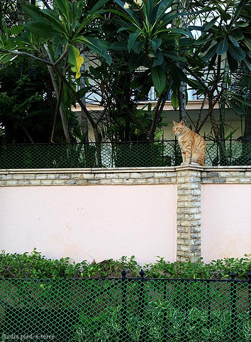 Chennai Cat