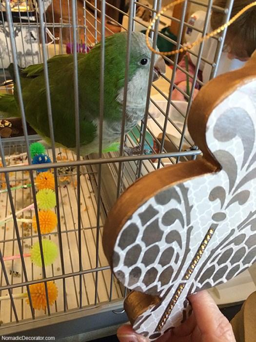 Pat the Parrot Says Okay