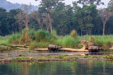 One-horned rhinos in Chitwan National Park