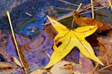 A bright yellow leaf lying alongside Bald River