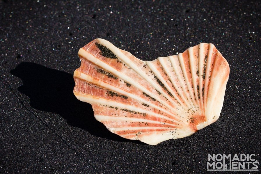 Volcanic Seashell