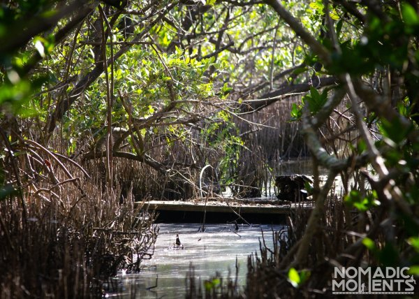The swampy conditions lining the Bird's Impoundment Trail.