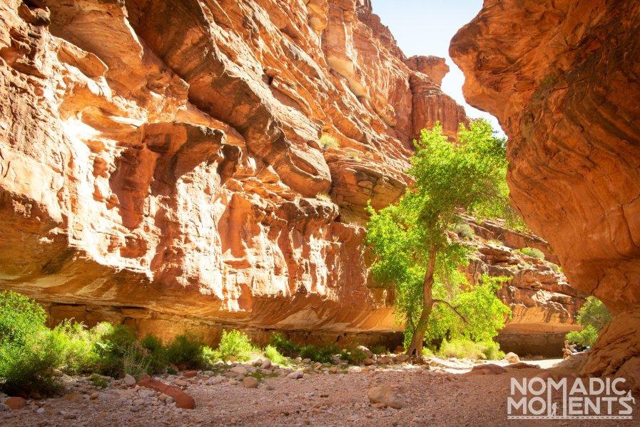A tree inside Hualapai Canyon