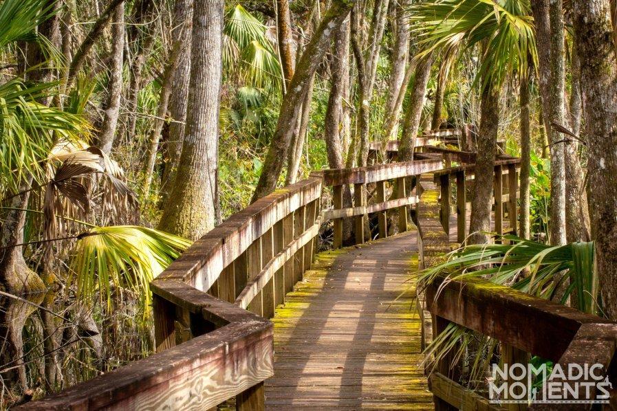 Highlands Hammock Boardwalk