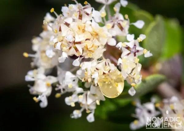 Waterdrop Flower