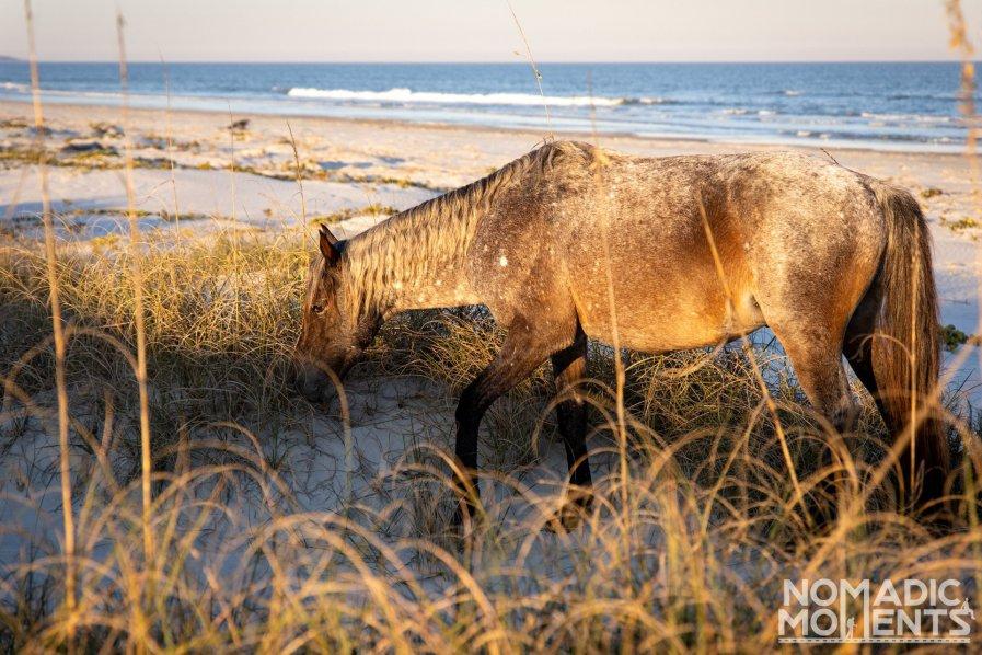 Beach Wild Horse