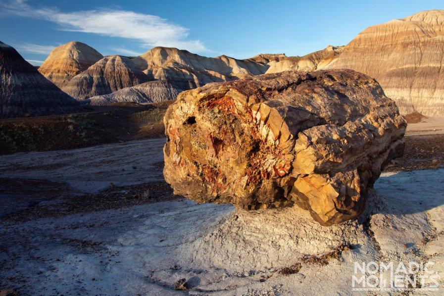 Blue Mesa Petrified Log