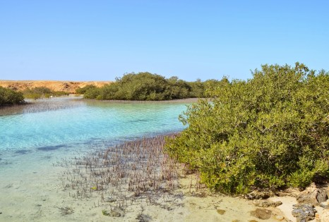 Mangroves at Ras Mohammad National Park in Sinai, Egypt