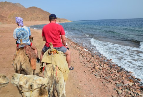 Riding camels on the beach at Abu Galom in Sinai, Egypt