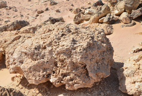 Dead coral at Ras Mohammad National Park in Sinai, Egypt