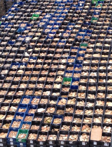 My mouth is watering looking at all these crates… Harbor of Eleutherios, Yenikapı, Istanbul, Turkey