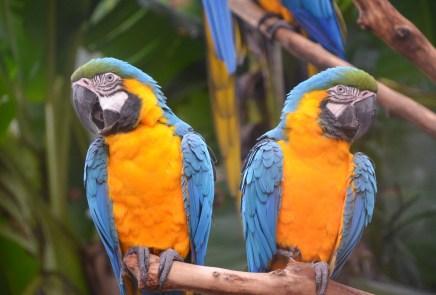 Parque das Aves in Foz do Iguaçu, Brazil
