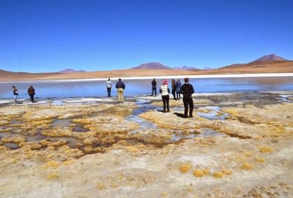 Laguna Cañapa at Reserva Nacional de Fauna Andina Eduardo Abaroa, Bolivia
