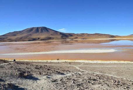 Laguna Colorada at Reserva Nacional de Fauna Andina Eduardo Abaroa, Bolivia