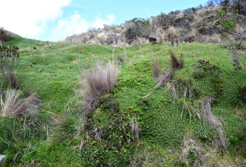 Interesting vegetation at Los Nevados National Park in Colombia