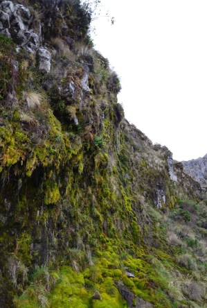 Aguacerales at Los Nevados National Park in Colombia