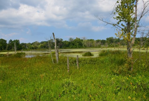 Great Marsh Trail Indiana Dunes National Lakeshore