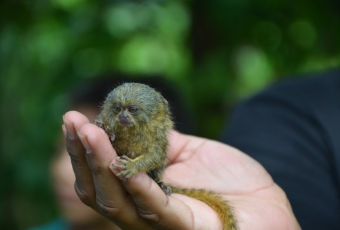 Monkey at Yagua Indigenous Community Amazonas Colombia