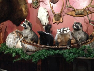 Trophy Animals at Buckhorn Exchange in Denver, Colorado