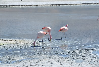 Laguna Hedionda at Reserva Nacional de Fauna Andina Eduardo Abaroa, Bolivia