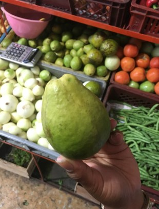 Guava Fruit in Colombia
